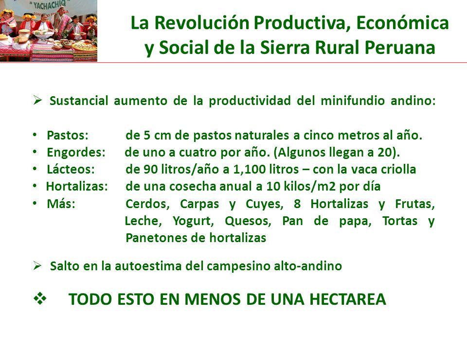 Sustancial aumento de la productividad del minifundio andino: Pastos: de 5 cm de pastos naturales a cinco metros al año.