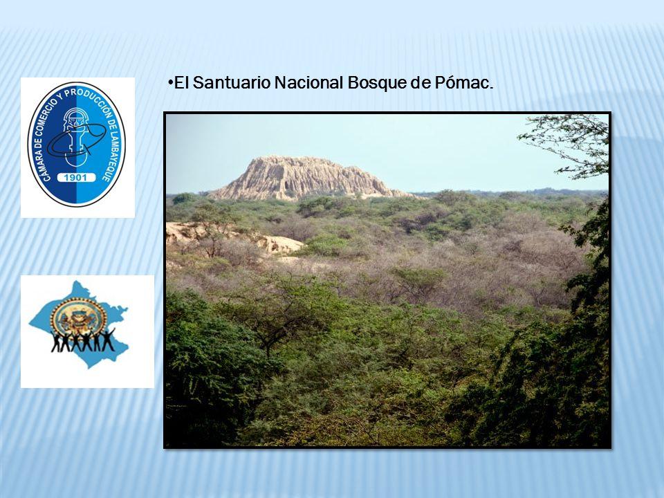El Santuario Nacional Bosque de Pómac.