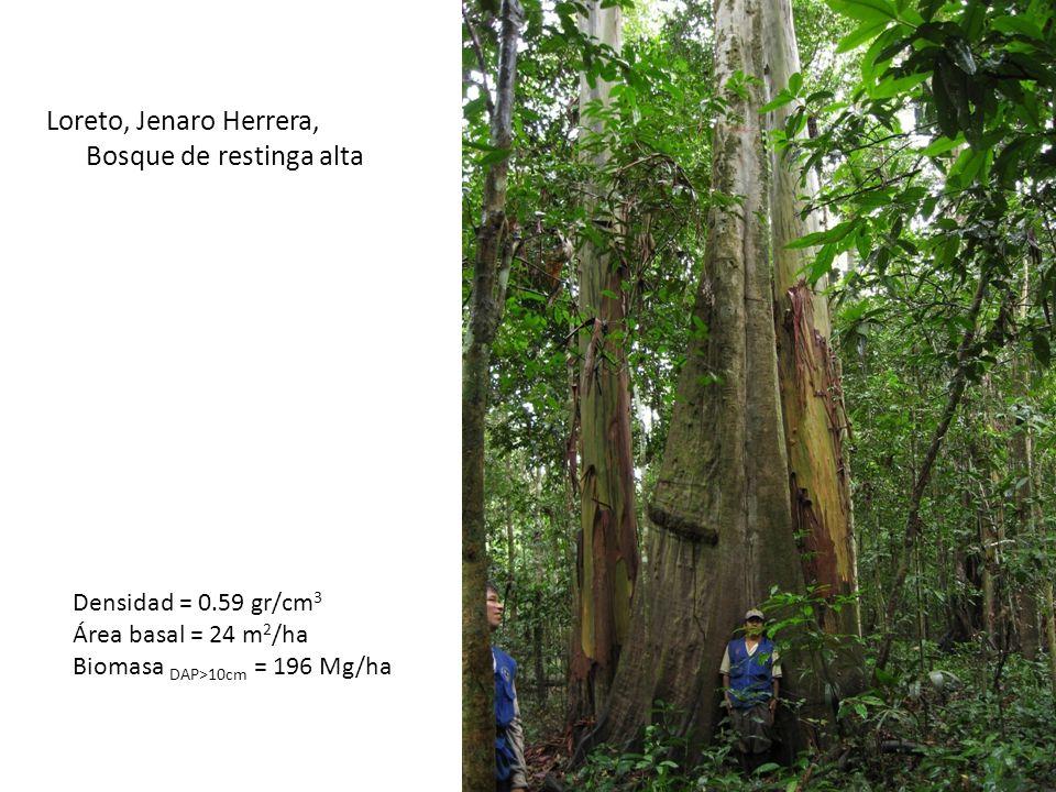 STOCKFLUJOS Biomasa viva (DAP>10cm)196Mg/haProductividad (DAP>10cm)8.1Mg/ha/ano Biomasa viva (DAP2.5-10cm)8Mg/haProductividad (DAP1-10cm)1.9Mg/ha/ano Biomasa viva (DAP<2.5cm)2Mg/ha Necromasa (DAP<10cm)5Mg/haProductividad (hojas)7.0Mg/ha/ano Necromasa (DAP>10cm)9Mg/haMortalidad (DAP>10cm)2.5Mg/ha/ano Ciclo del carbono