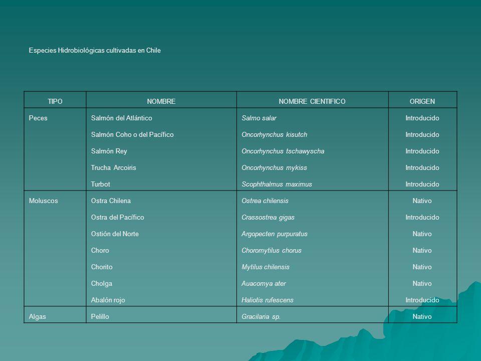 Especies Hidrobiológicas cultivadas en Chile TIPONOMBRENOMBRE CIENTIFICOORIGEN PecesSalmón del AtlánticoSalmo salarIntroducido Salmón Coho o del Pacíf
