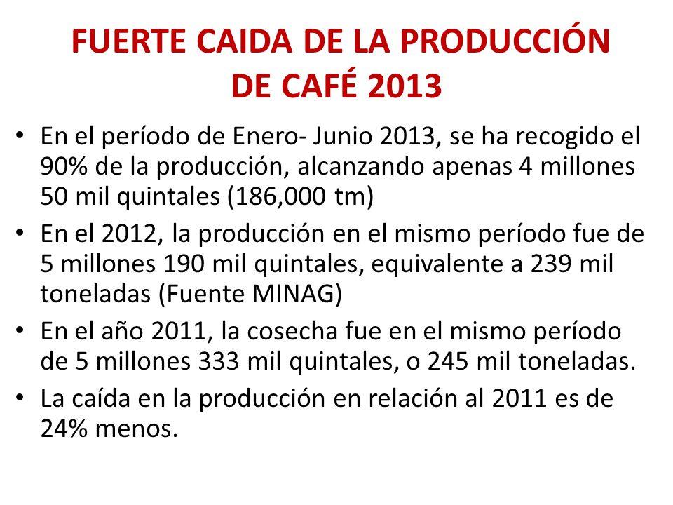 FUERTE CAIDA DE LA PRODUCCIÓN DE CAFÉ 2013 En el período de Enero- Junio 2013, se ha recogido el 90% de la producción, alcanzando apenas 4 millones 50 mil quintales (186,000 tm) En el 2012, la producción en el mismo período fue de 5 millones 190 mil quintales, equivalente a 239 mil toneladas (Fuente MINAG) En el año 2011, la cosecha fue en el mismo período de 5 millones 333 mil quintales, o 245 mil toneladas.