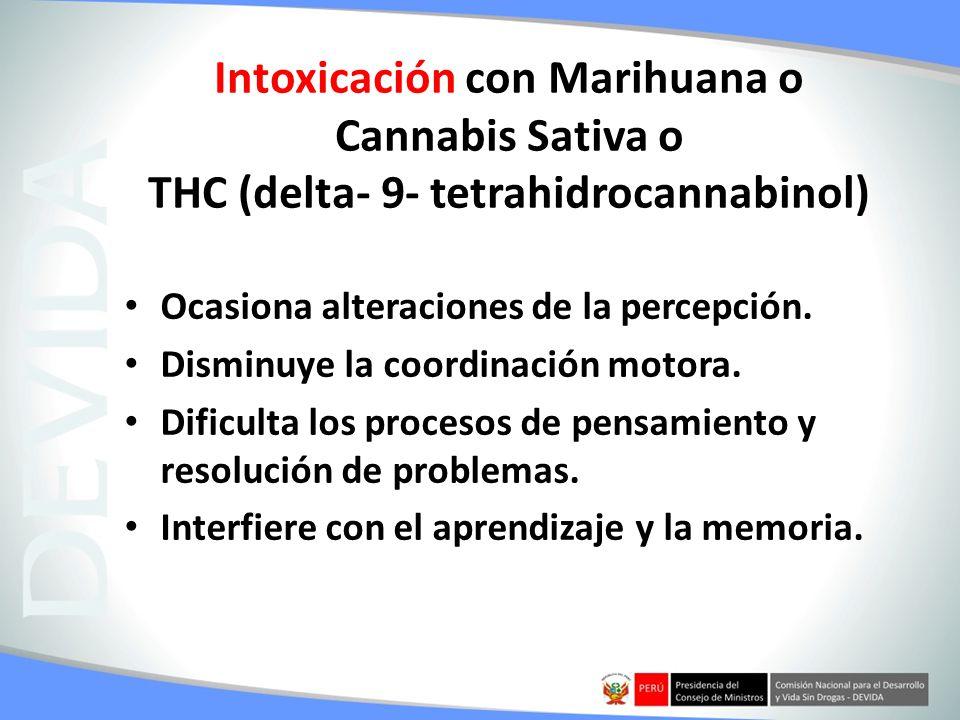 Intoxicación con Marihuana o Cannabis Sativa o THC (delta- 9- tetrahidrocannabinol) Ocasiona alteraciones de la percepción. Disminuye la coordinación