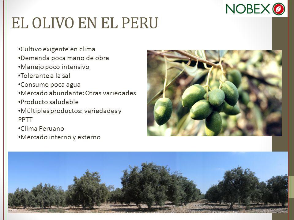 EL OLIVO EN EL PERU Cultivo exigente en clima Demanda poca mano de obra Manejo poco intensivo Tolerante a la sal Consume poca agua Mercado abundante: