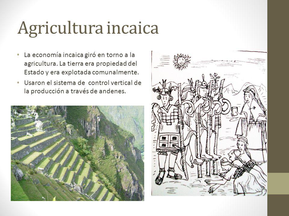 Agricultura incaica La economía incaica giró en torno a la agricultura. La tierra era propiedad del Estado y era explotada comunalmente. Usaron el sis