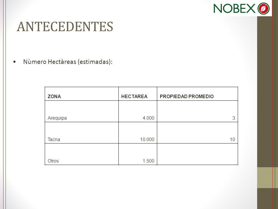 ANTECEDENTES Nùmero Hectàreas (estimadas): ZONAHECTAREAPROPIEDAD PROMEDIO Arequipa4.0003 Tacna10.00010 Otros1.500