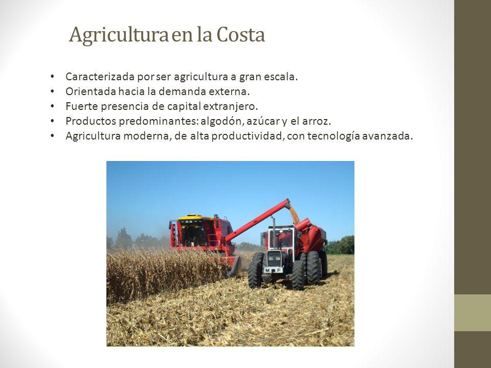 Agricultura en la Costa Caracterizada por ser agricultura a gran escala. Orientada hacia la demanda externa. Fuerte presencia de capital extranjero. P