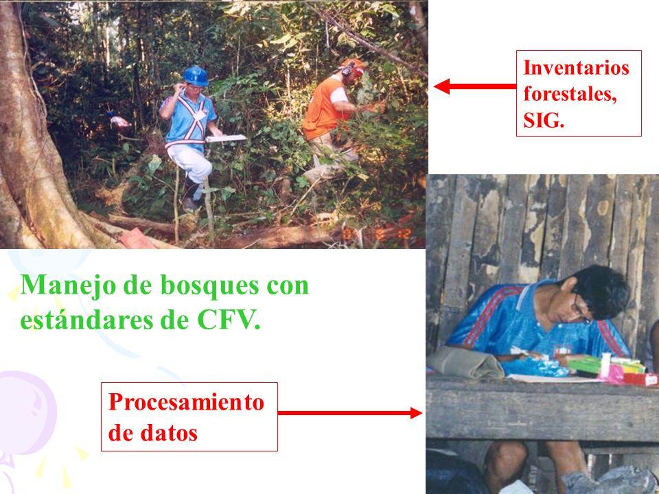Inventarios forestales, SIG. Manejo de bosques con estándares de CFV. Procesamiento de datos