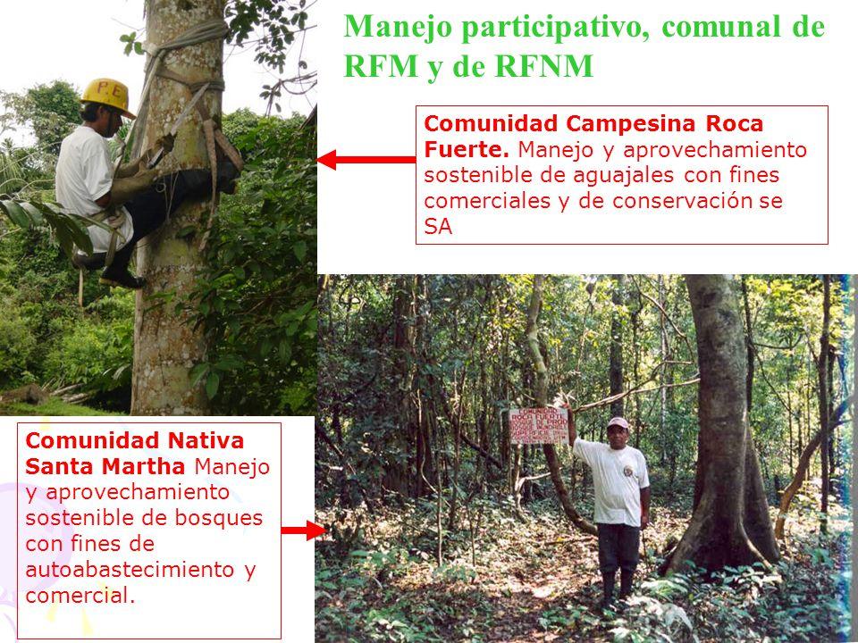 Manejo participativo, comunal de RFM y de RFNM Comunidad Campesina Roca Fuerte. Manejo y aprovechamiento sostenible de aguajales con fines comerciales