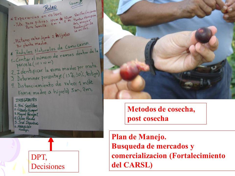 DPT, Decisiones Metodos de cosecha, post cosecha Plan de Manejo. Busqueda de mercados y comercializacion (Fortalecimiento del CARSL)