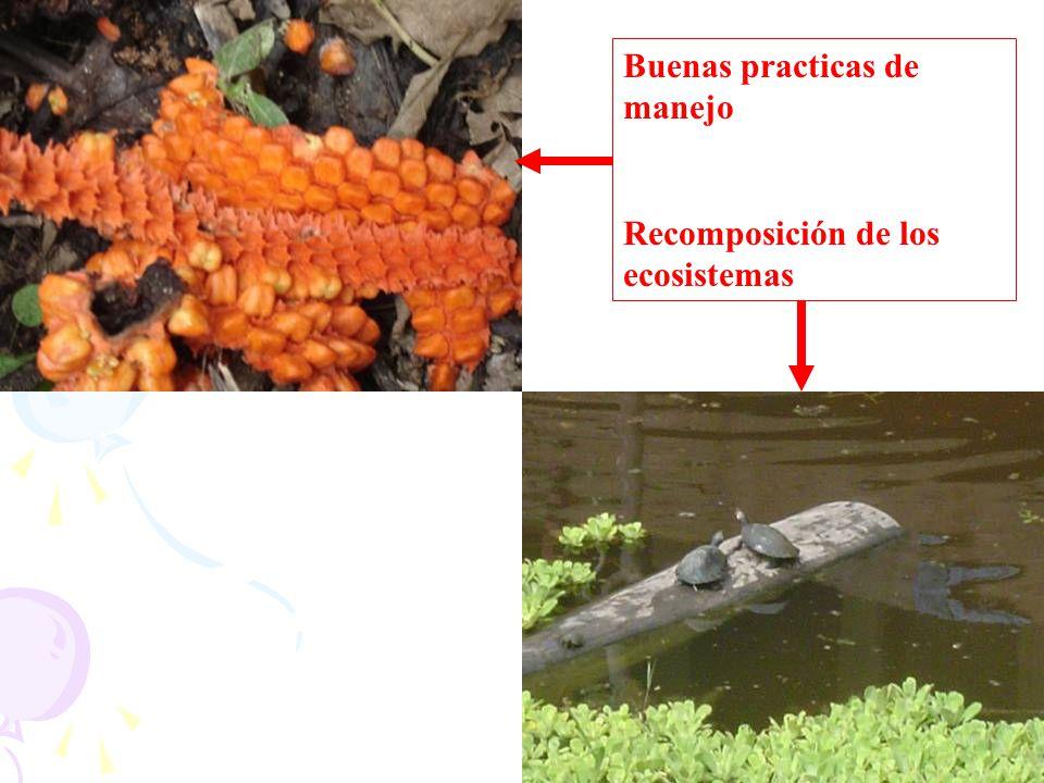 Buenas practicas de manejo Recomposición de los ecosistemas