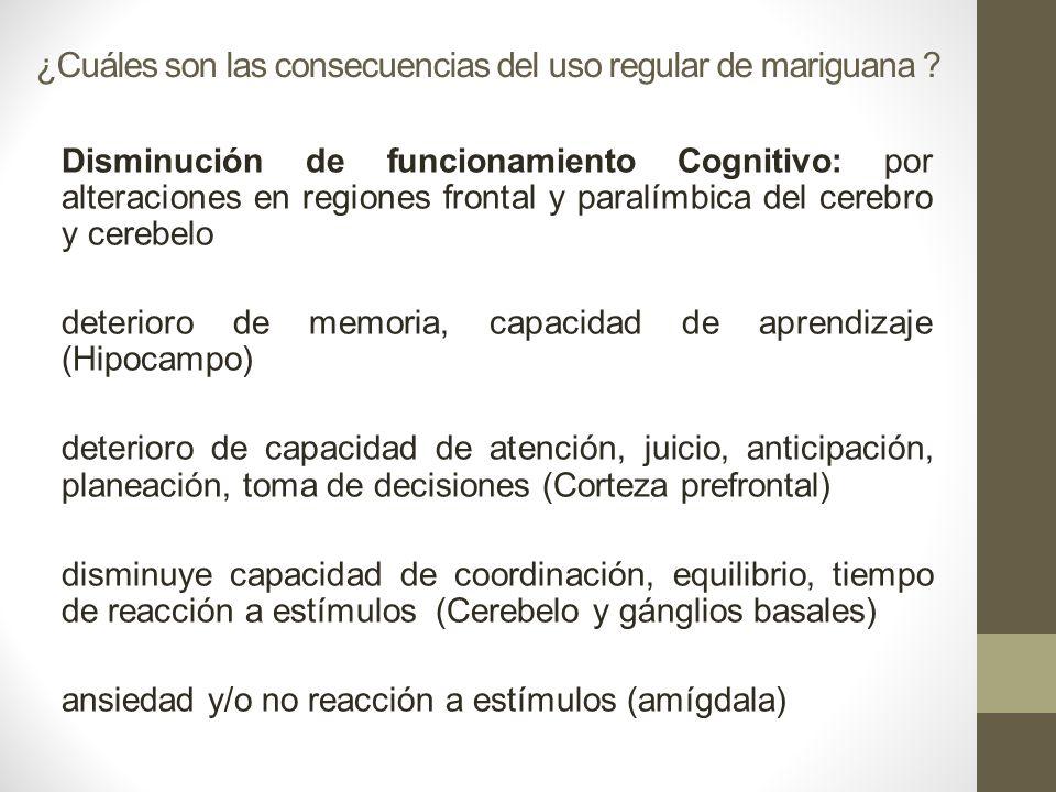 ¿Cuáles son las consecuencias del uso regular de mariguana ? Disminución de funcionamiento Cognitivo: por alteraciones en regiones frontal y paralímbi