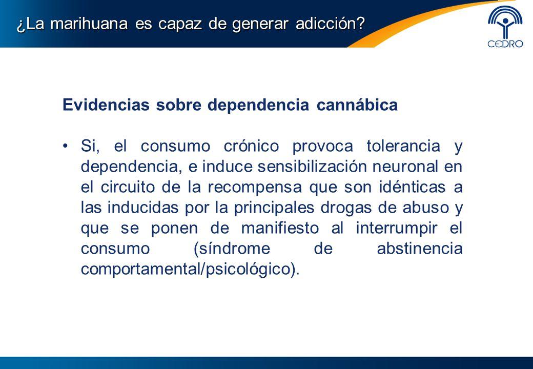 Evidencias sobre dependencia cannábica Si, el consumo crónico provoca tolerancia y dependencia, e induce sensibilización neuronal en el circuito de la