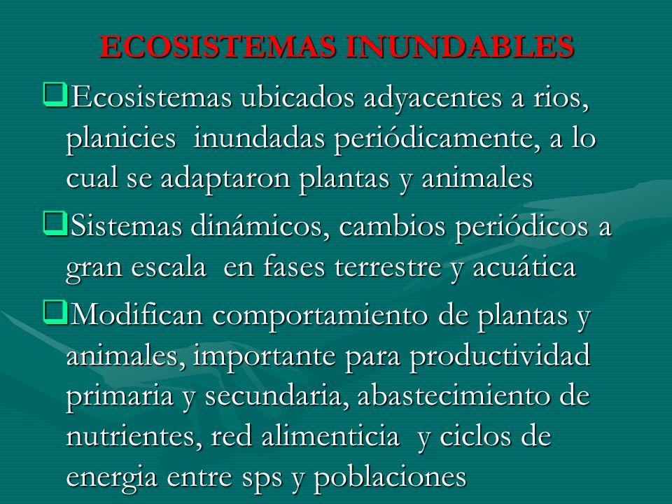 ECOSISTEMAS INUNDABLES Ecosistemas ubicados adyacentes a rios, planicies inundadas periódicamente, a lo cual se adaptaron plantas y animales Ecosistem
