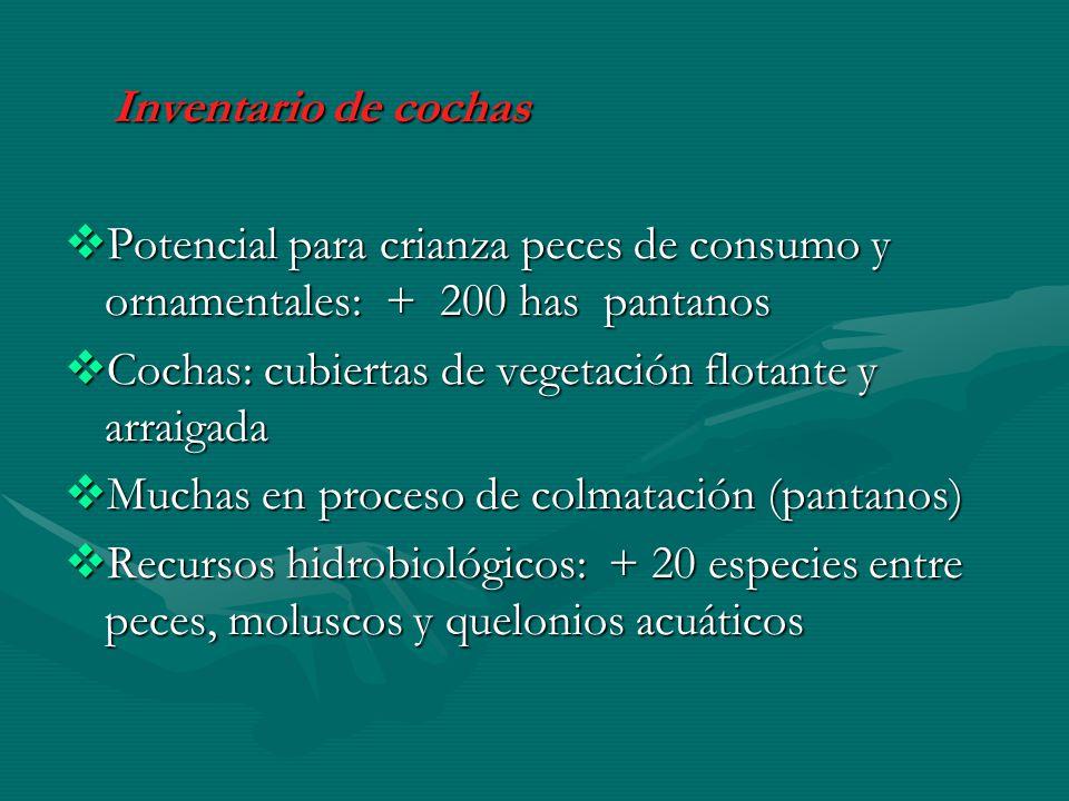 Inventario de cochas Inventario de cochas Potencial para crianza peces de consumo y ornamentales: + 200 has pantanos Potencial para crianza peces de c