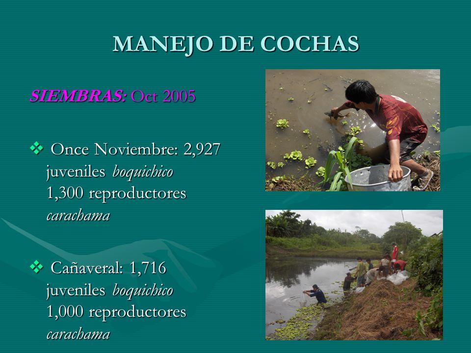 MANEJO DE COCHAS SIEMBRAS: Oct 2005 Once Noviembre: 2,927 juveniles boquichico 1,300 reproductores carachama Once Noviembre: 2,927 juveniles boquichic