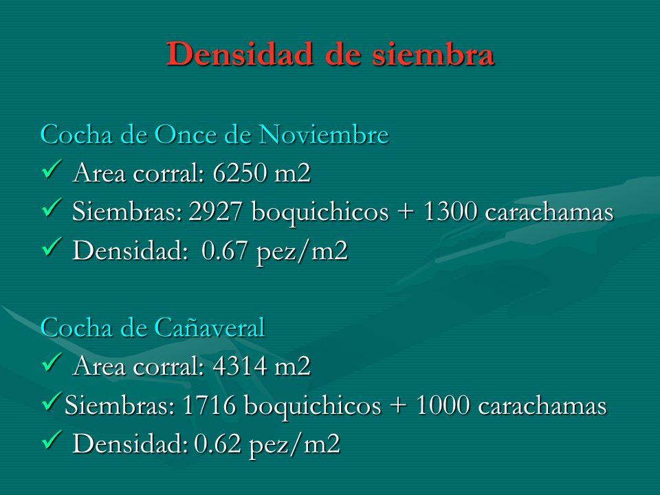 Densidad de siembra Cocha de Once de Noviembre Area corral: 6250 m2 Area corral: 6250 m2 Siembras: 2927 boquichicos + 1300 carachamas Siembras: 2927 b