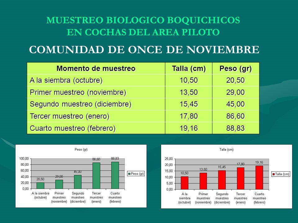 Momento de muestreo Talla (cm) Peso (gr) A la siembra (octubre) 10,5020,50 Primer muestreo (noviembre) 13,5029,00 Segundo muestreo (diciembre) 15,4545