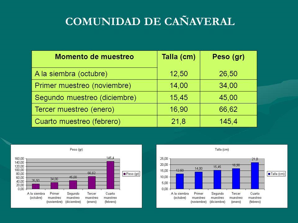 COMUNIDAD DE CAÑAVERAL Momento de muestreoTalla (cm)Peso (gr) A la siembra (octubre)12,5026,50 Primer muestreo (noviembre)14,0034,00 Segundo muestreo