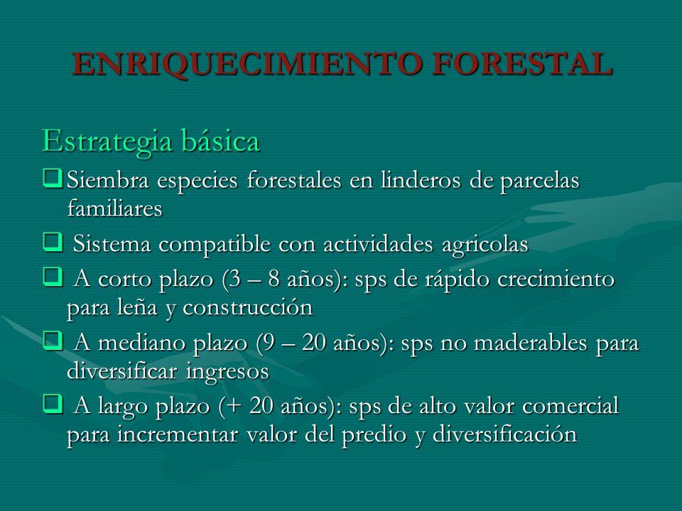 Estrategia básica Siembra especies forestales en linderos de parcelas familiares Siembra especies forestales en linderos de parcelas familiares Sistem