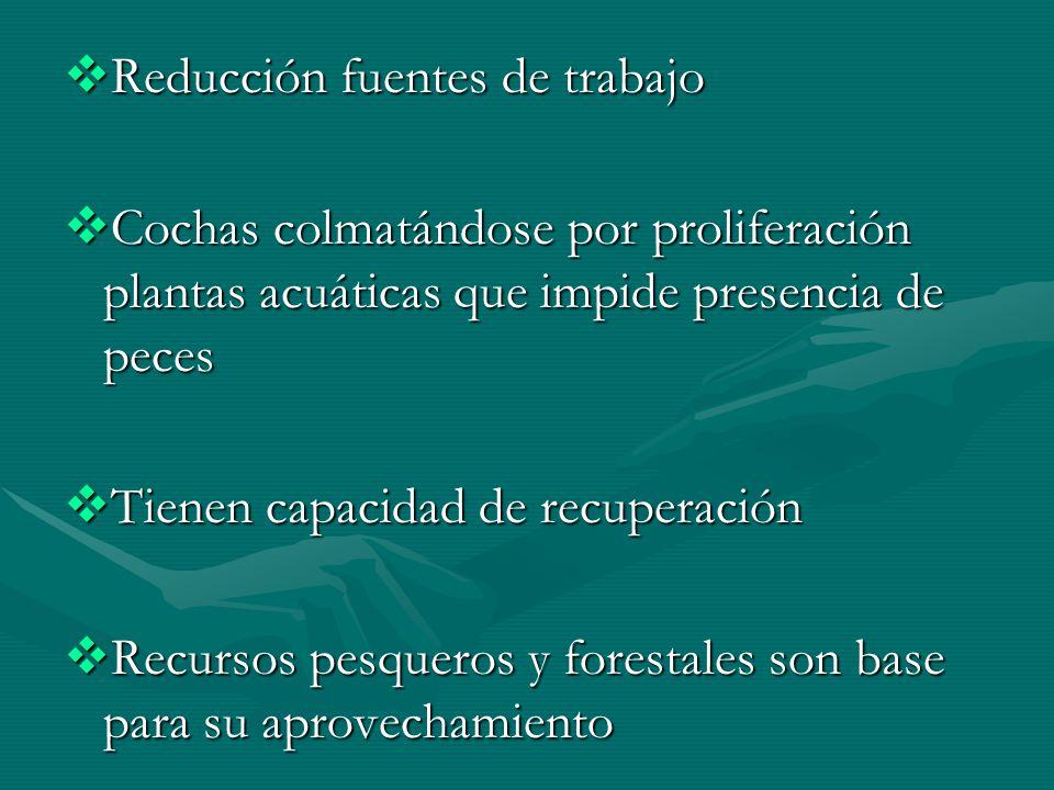 FORTALECIMIENTO ORGANIZACIONAL ENFOQUE ECOSISTEMICO /Manejo de DB: Sensibilización y capacitación ENFOQUE ECOSISTEMICO /Manejo de DB: Sensibilización y capacitación Comités Manejo Cochas en Once Noviembre y Cañaveral Comités Manejo Cochas en Once Noviembre y Cañaveral Comités Enriquecimiento Forestal en Once de Noviembre/Cañaveral/ Cantagallo Comités Enriquecimiento Forestal en Once de Noviembre/Cañaveral/ Cantagallo EDUCACION AMBIENTAL: Taller Profesores EDUCACION AMBIENTAL: Taller Profesores Guias Prácticas para manejo cochas: 2 Guias Prácticas para manejo cochas: 2 Cartillas Técnicas (versión preliminar): Cedro/Caoba/Capirona/Yarina/Boquichico/Carach.