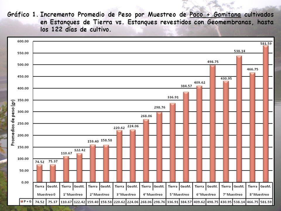 Gráfico 1.Incremento Promedio de Peso por Muestreo de Paco + Gamitana cultivados en Estanques de Tierra vs. Estanques revestidos con Geomembranas, has