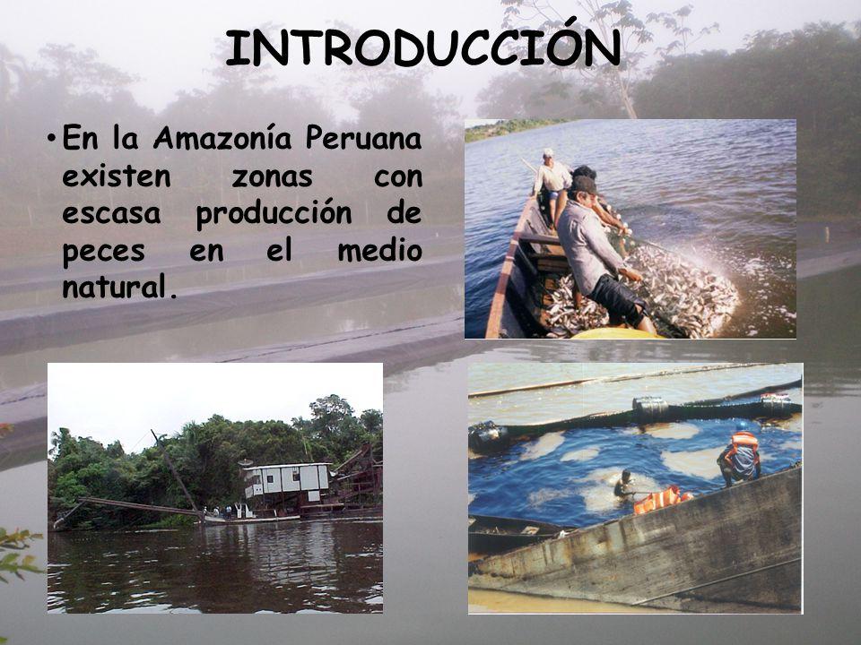 INTRODUCCIÓN En la Amazonía Peruana existen zonas con escasa producción de peces en el medio natural.