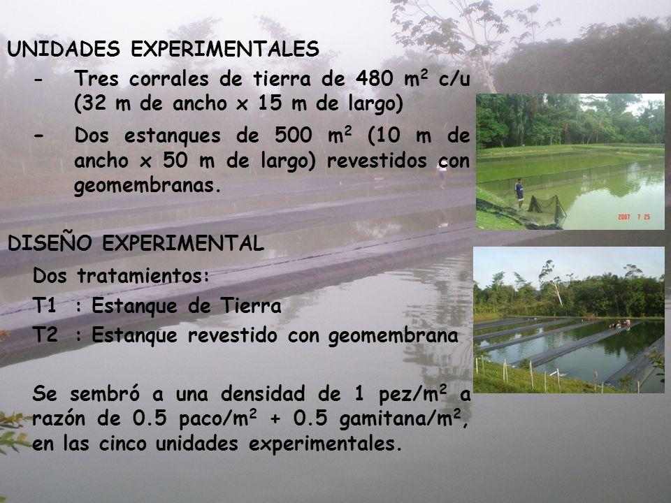 UNIDADES EXPERIMENTALES -Tres corrales de tierra de 480 m 2 c/u (32 m de ancho x 15 m de largo) - Dos estanques de 500 m 2 (10 m de ancho x 50 m de la