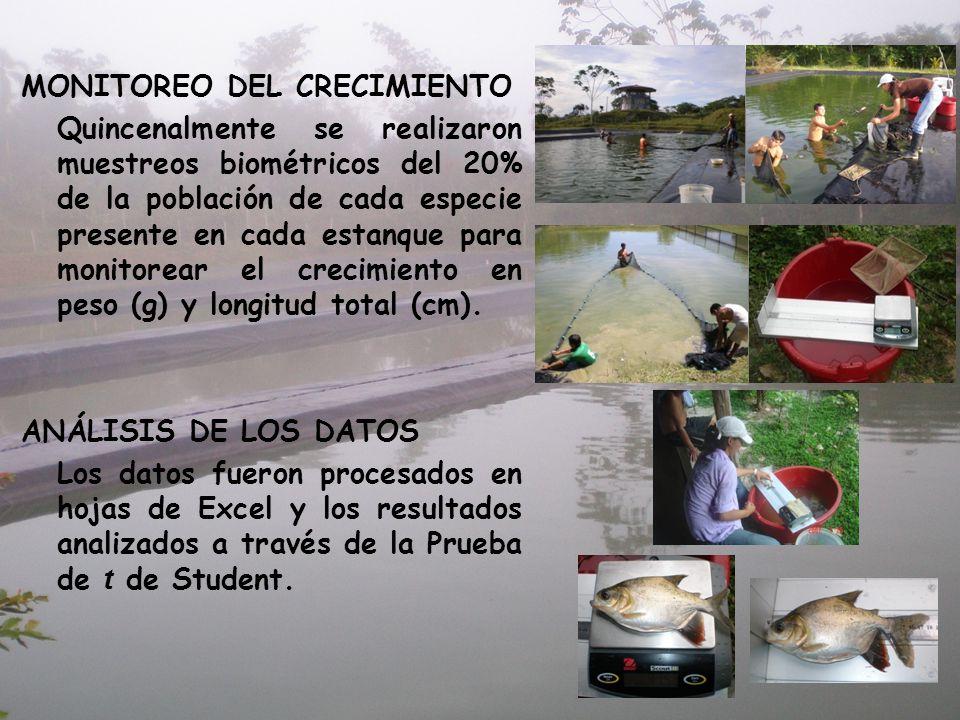 MONITOREO DEL CRECIMIENTO Quincenalmente se realizaron muestreos biométricos del 20% de la población de cada especie presente en cada estanque para mo