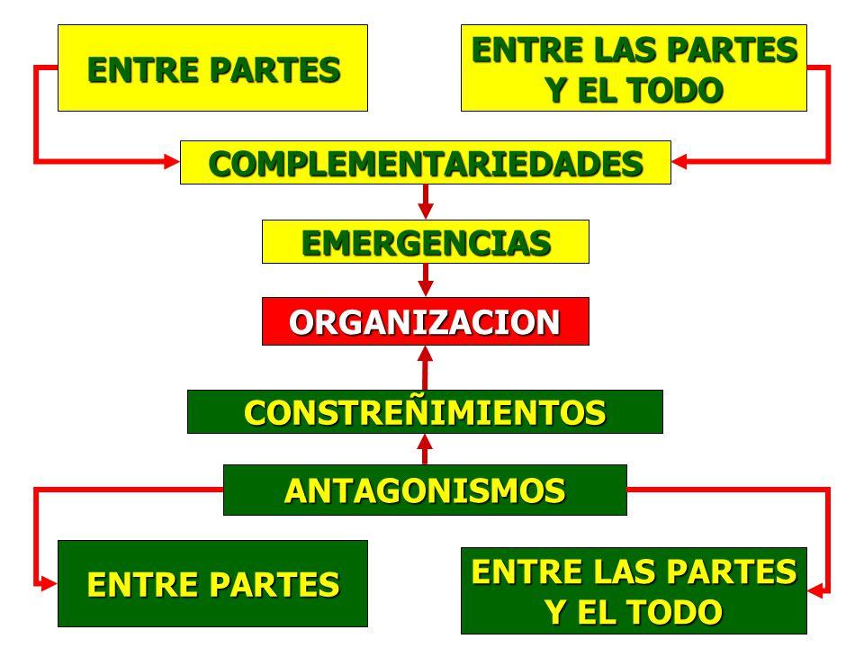 ENTRE PARTES ENTRE LAS PARTES Y EL TODO COMPLEMENTARIEDADES ORGANIZACION CONSTREÑIMIENTOS ANTAGONISMOS ENTRE PARTES ENTRE LAS PARTES Y EL TODO EMERGENCIAS