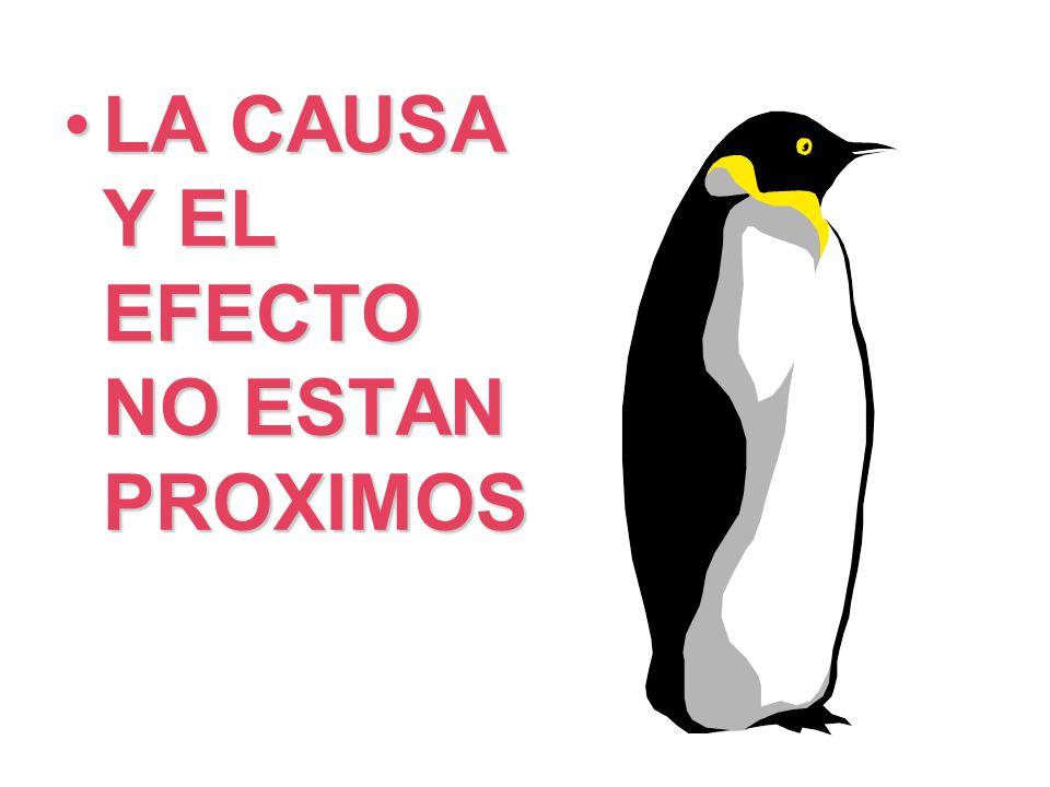 LA CAUSA Y EL EFECTO NO ESTAN PROXIMOSLA CAUSA Y EL EFECTO NO ESTAN PROXIMOS