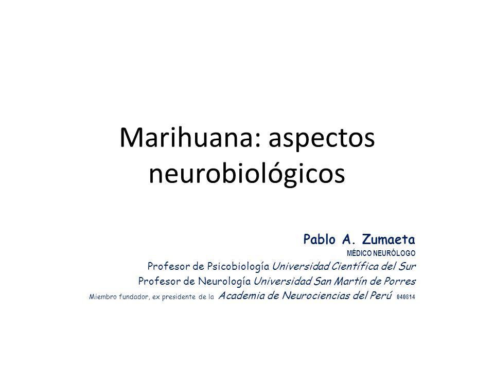 Marihuana: aspectos neurobiológicos Pablo A. Zumaeta MÉDICO NEURÓLOGO Profesor de Psicobiología Universidad Científica del Sur Profesor de Neurología