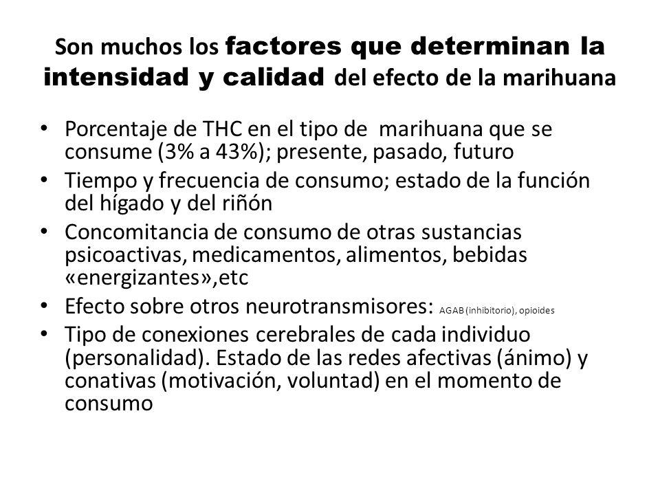 Son muchos los factores que determinan la intensidad y calidad del efecto de la marihuana Porcentaje de THC en el tipo de marihuana que se consume (3%