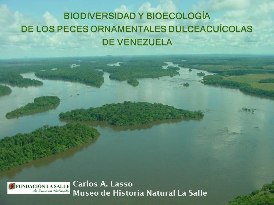 BIODIVERSIDAD Y BIOECOLOGÍA DE LOS PECES ORNAMENTALES DULCEACUÍCOLAS DE VENEZUELA Carlos A. Lasso Museo de Historia Natural La Salle