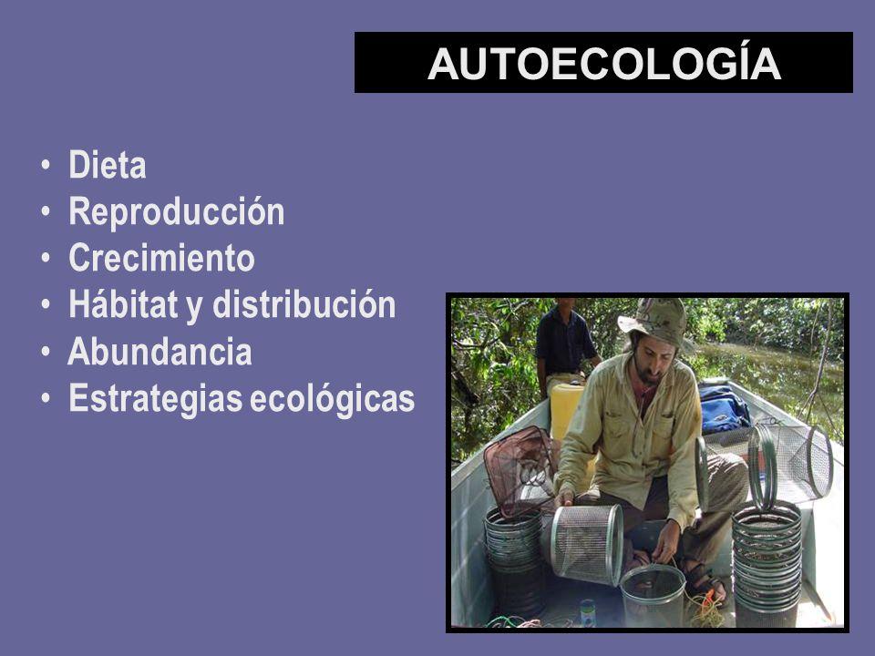 Dieta Reproducción Crecimiento Hábitat y distribución Abundancia Estrategias ecológicas AUTOECOLOGÍA