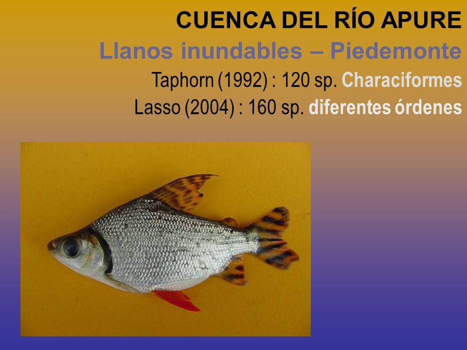 CUENCA DEL RÍO APURE Llanos inundables – Piedemonte Taphorn (1992) : 120 sp. Characiformes Lasso (2004) : 160 sp. diferentes órdenes