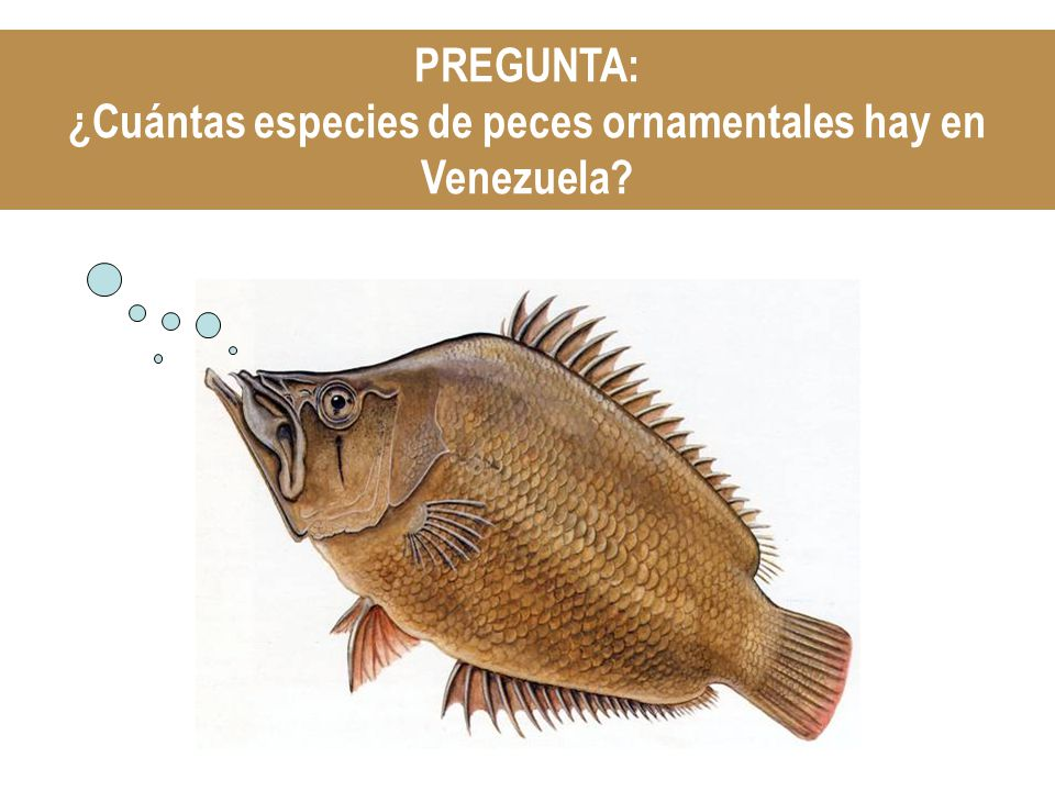 PREGUNTA: ¿Cuántas especies de peces ornamentales hay en Venezuela?