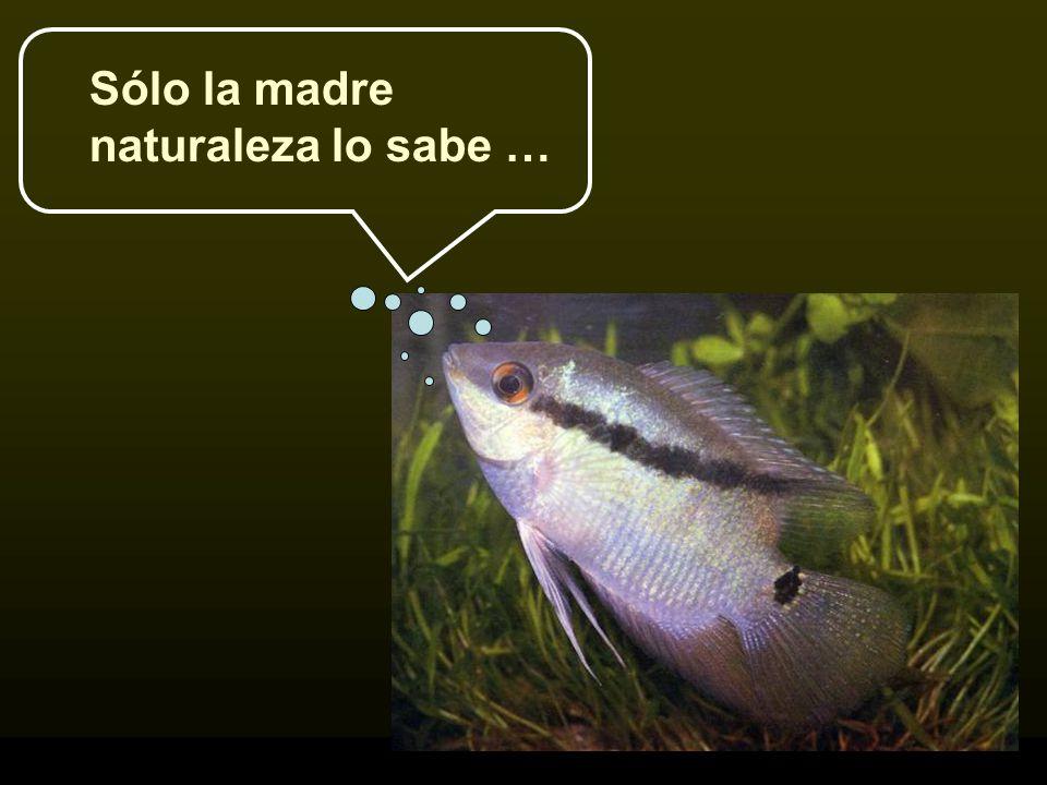 Sólo la madre naturaleza lo sabe …