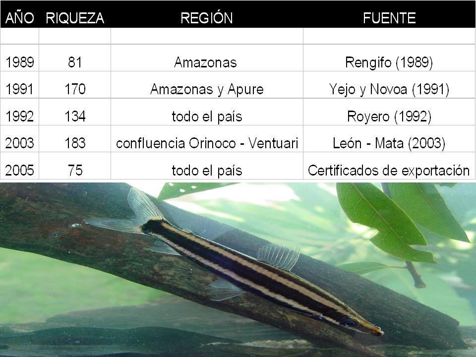 SILURIFORMES (bagres, cuchas): 34 sp.PERCIFORMES (Cichlidae): 18 sp.