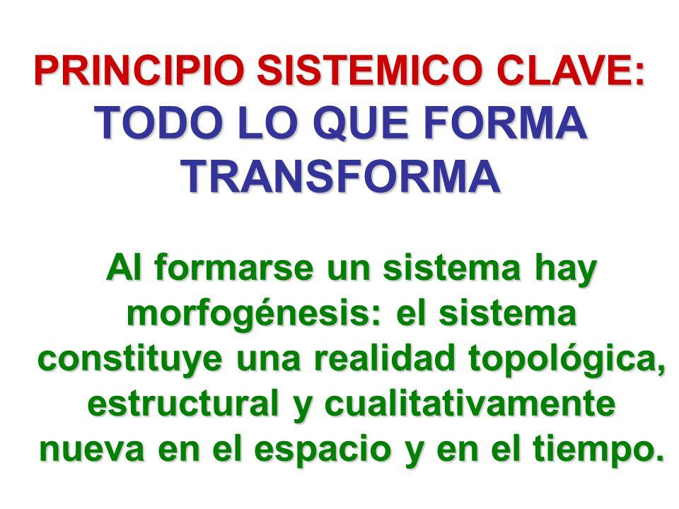 Al formarse un sistema hay morfogénesis: el sistema constituye una realidad topológica, estructural y cualitativamente nueva en el espacio y en el tie