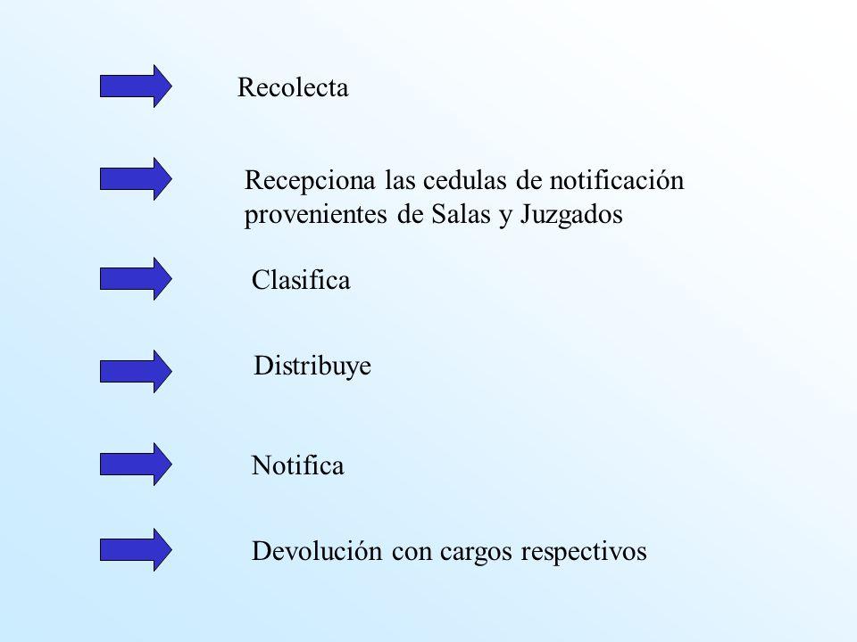 Recolecta Recepciona las cedulas de notificación provenientes de Salas y Juzgados Clasifica Distribuye Devolución con cargos respectivos Notifica