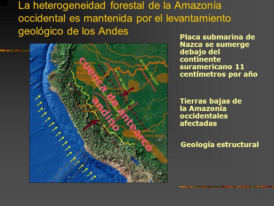 La heterogeneidad forestal de la Amazonía occidental es mantenida por el levantamiento geológico de los Andes Según Räsänen et al. 1993 arco de Fizcar