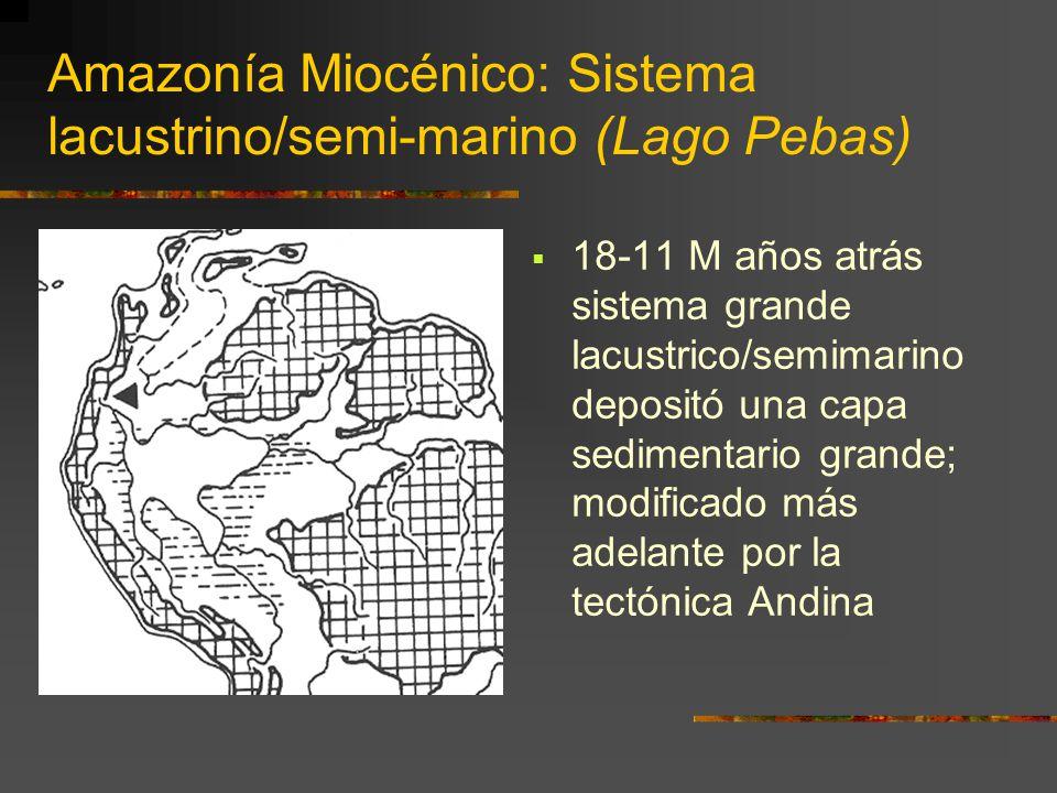 Amazonía Miocénico: Sistema lacustrino/semi-marino (Lago Pebas) 18-11 M años atrás sistema grande lacustrico/semimarino depositó una capa sedimentario