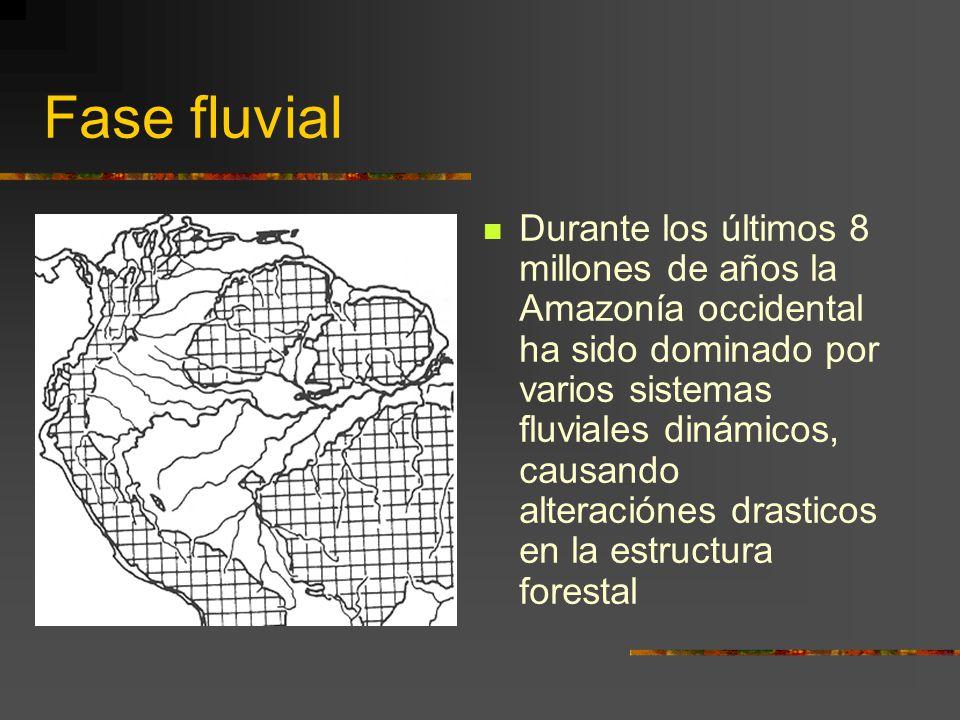Fase fluvial Durante los últimos 8 millones de años la Amazonía occidental ha sido dominado por varios sistemas fluviales dinámicos, causando alteraci