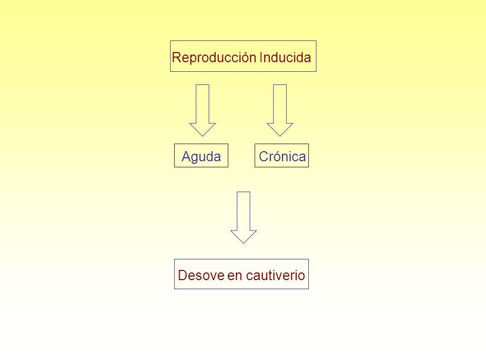 Reproducción Inducida CrónicaAguda Desove en cautiverio