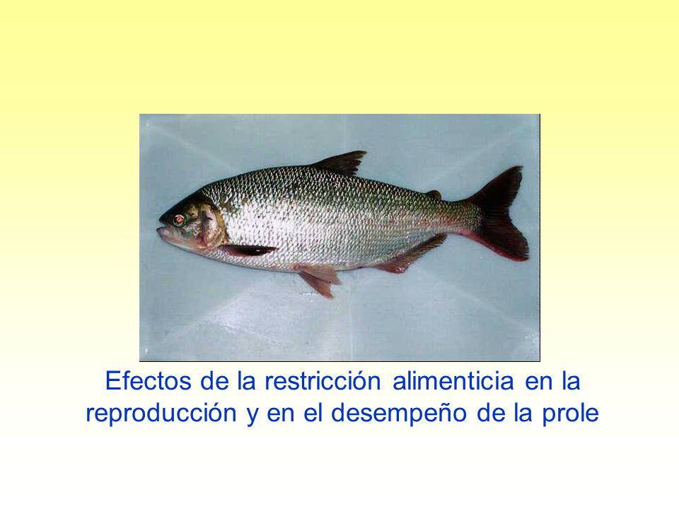 Efectos de la restricción alimenticia en la reproducción y en el desempeño de la prole