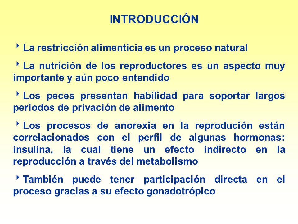 INTRODUCCIÓN La restricción alimenticia es un proceso natural La nutrición de los reproductores es un aspecto muy importante y aún poco entendido Los