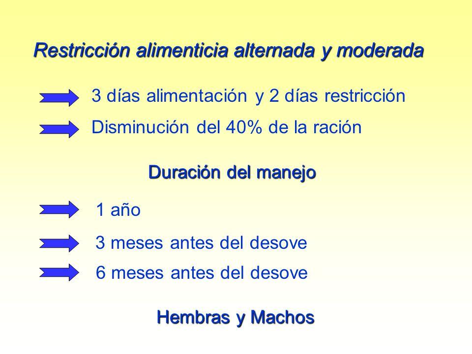 Restricción alimenticia alternada y moderada 3 días alimentación y 2 días restricción Disminución del 40% de la ración Duración del manejo 1 año Hembr