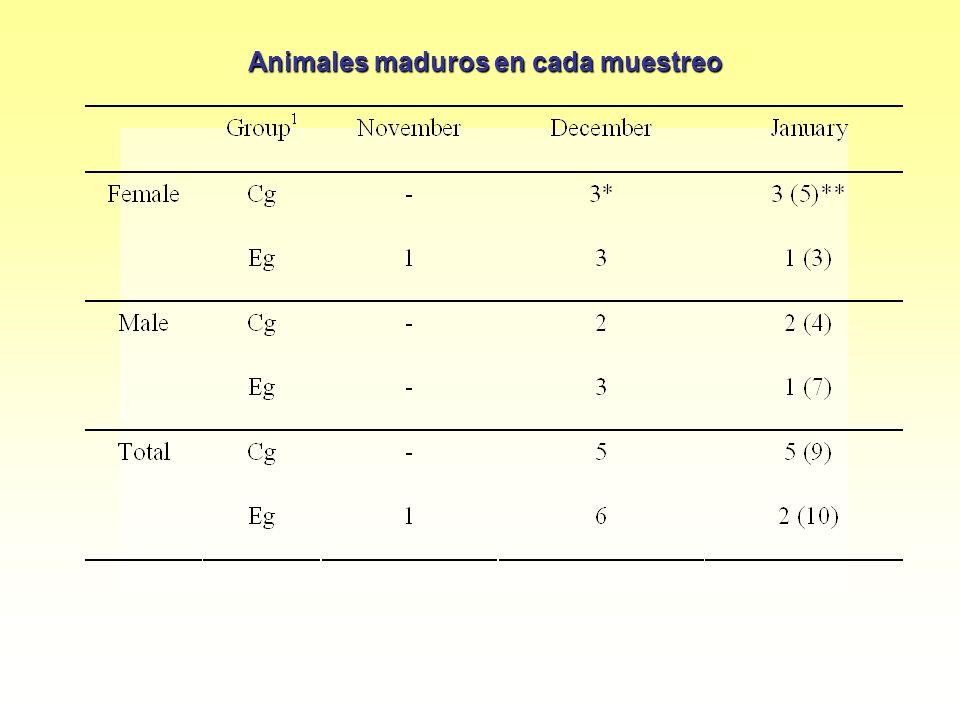 Animales maduros en cada muestreo