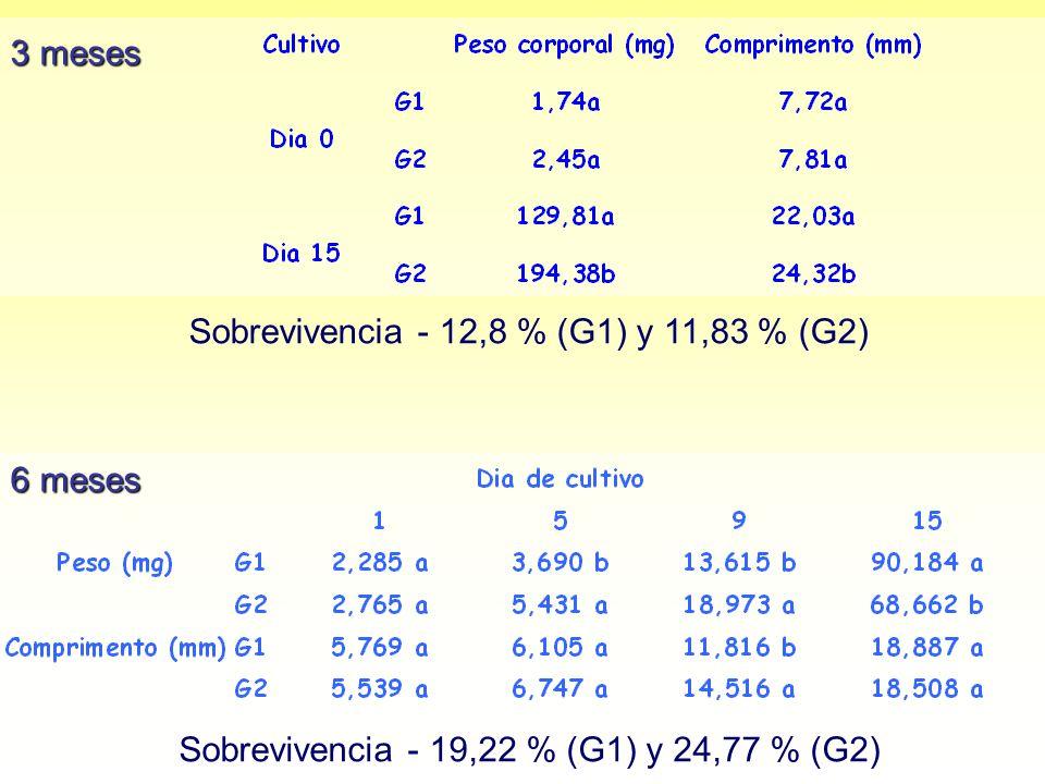 3 meses Sobrevivencia - 12,8 % (G1) y 11,83 % (G2) 6 meses Sobrevivencia - 19,22 % (G1) y 24,77 % (G2)