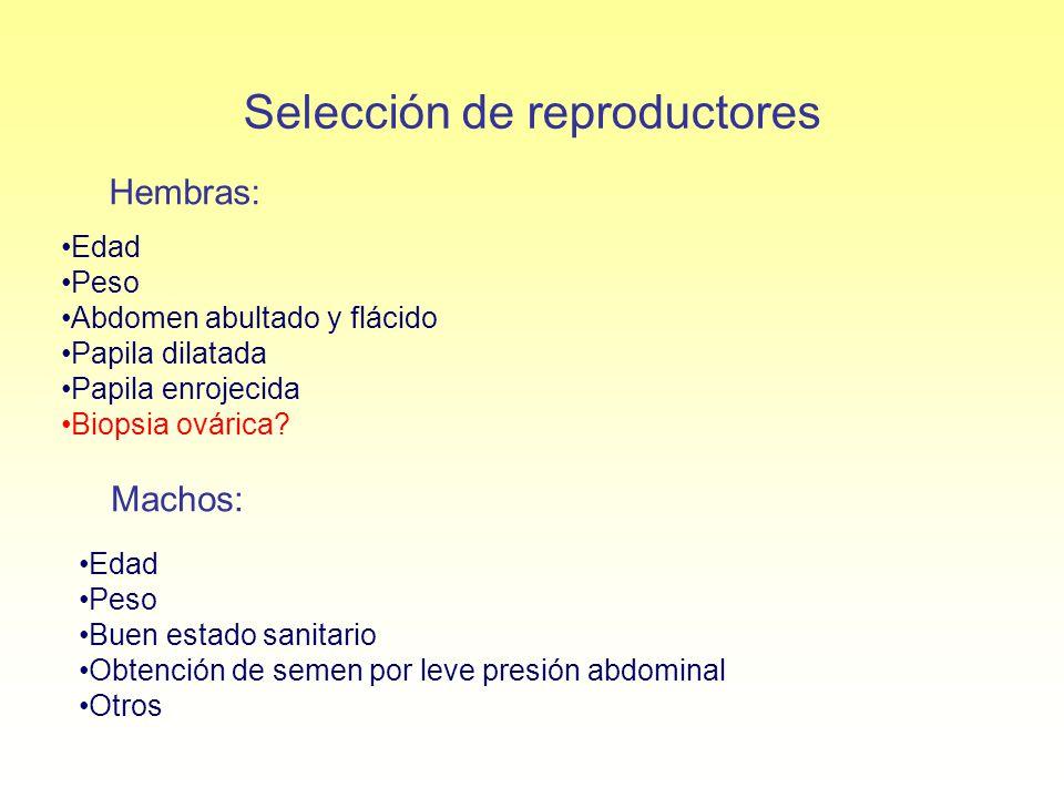 Selección de reproductores Hembras: Machos: Edad Peso Abdomen abultado y flácido Papila dilatada Papila enrojecida Biopsia ovárica? Edad Peso Buen est